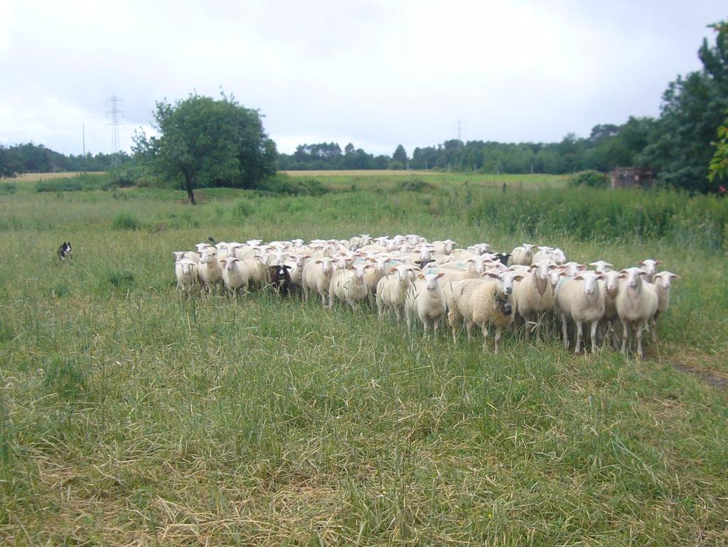 2012-06-10-les-agnelles-2[1]