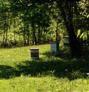 cdk3u-ruches